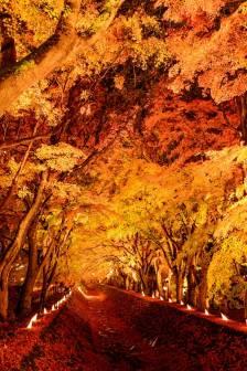河口湖町【紅葉まつり】の開催が決定いたしました。